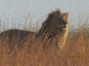 Great Shot on Last Early Morning Drive. Courtesy of Lucille Johnson