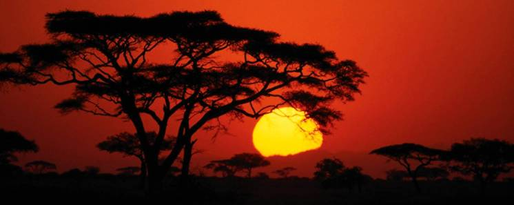 On the Serengeti