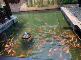 Koi Pond in the Garden