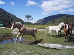 Wild Horses at End of the World